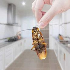 Como as pragas podem interferir na nossa saúde?
