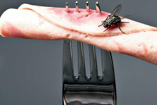 Elimine as moscas