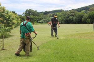 Como combater as pragas em terrenos baldios?