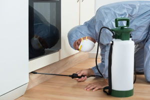 Como tornar a sua casa mais segura contra as pragas?