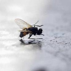 Eliminando as moscas dentro de casa
