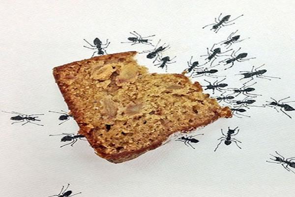 Sua casa tem muitas formigas?