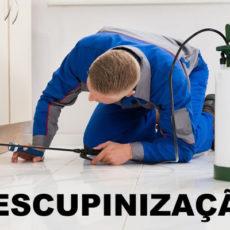 Descupinização: O que é? E como contratar?